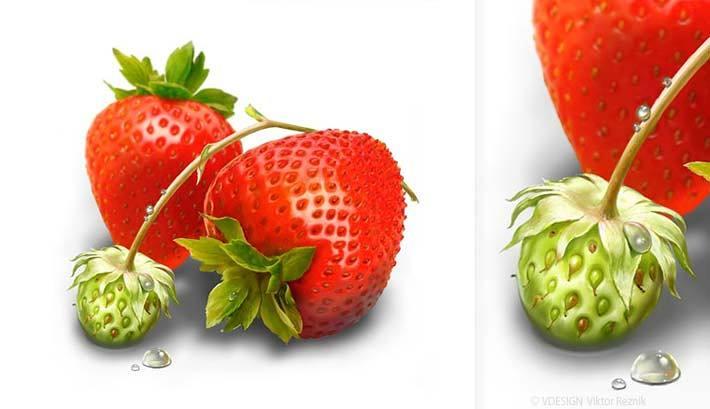 Illustration Erdberen | Reitenbach Großhandel